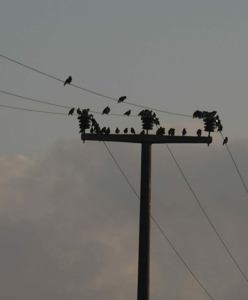 ALLE Vögel sind schon daa..